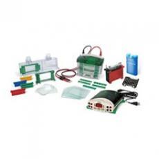美国Bio-Rad伯乐Mini-PROTEAN® Tetra电泳转印系统1658033