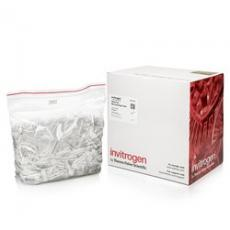 Thermofisher/RNase-free Microfuge Tubes (2.0 ml)/AM12425