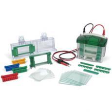 1658033,美国Bio-Rad伯乐Mini-PROTEAN® Tetra电泳转印系统1658033